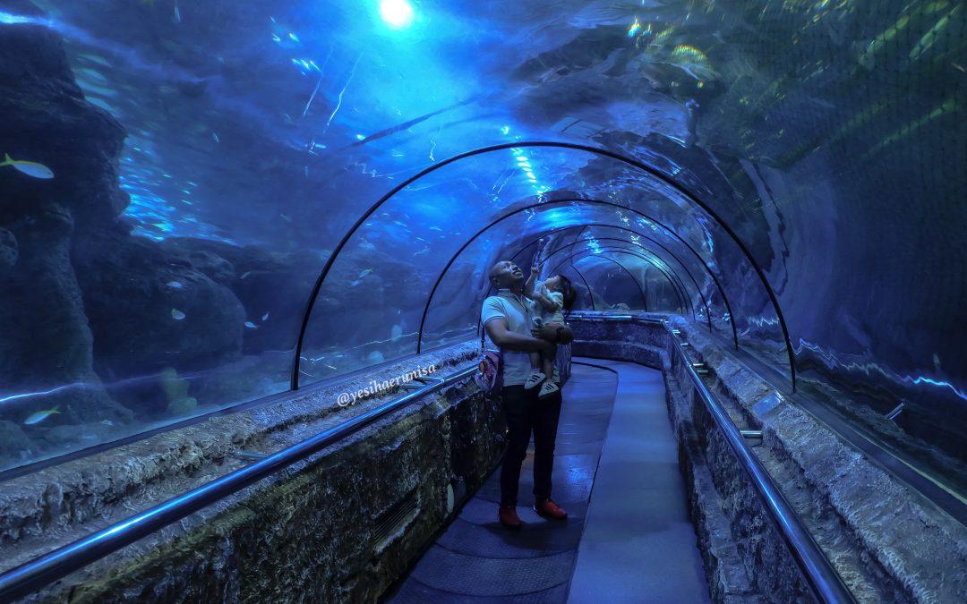 My Travel Diary : Seaworld Indonesia